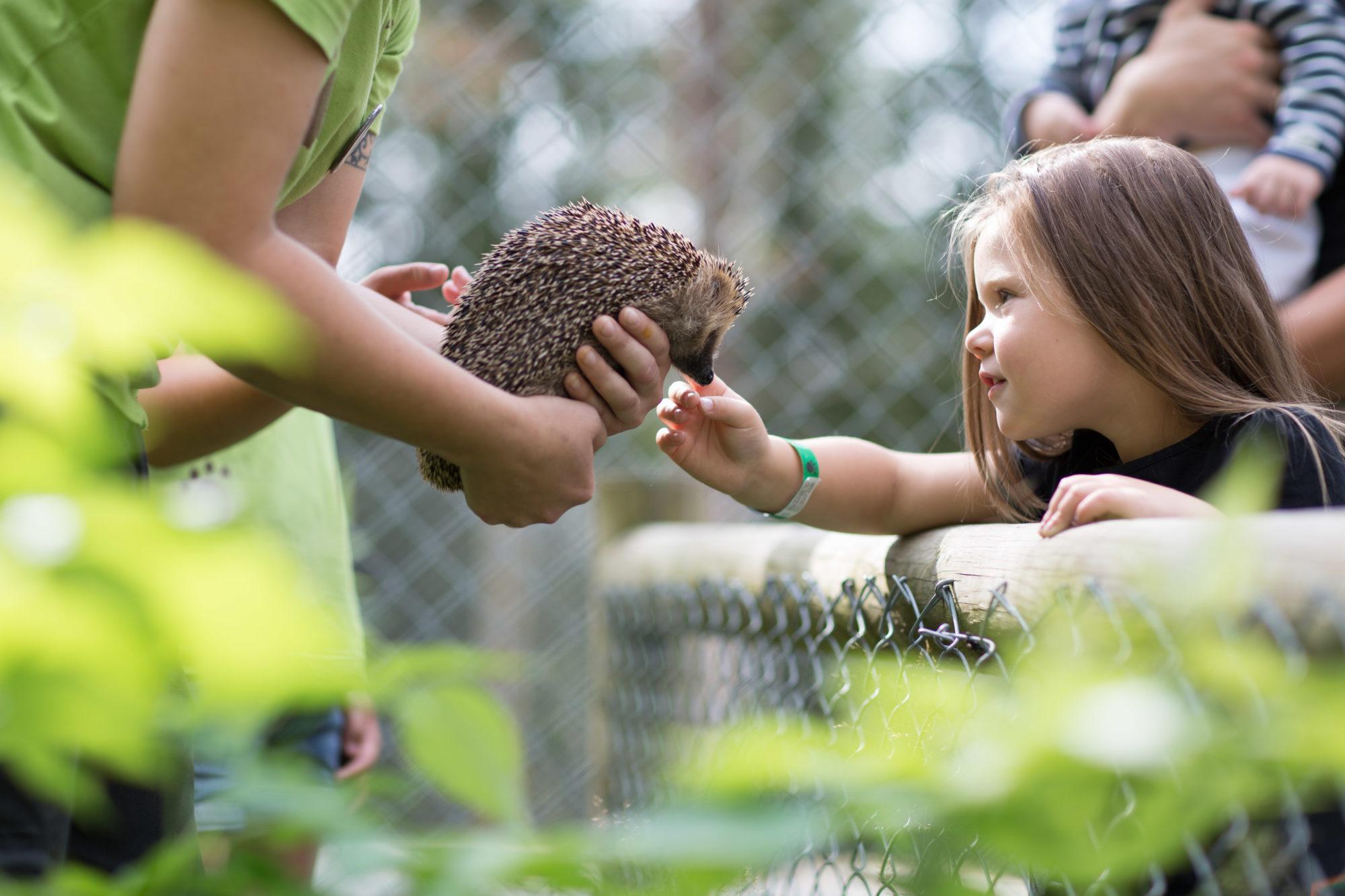 Namsskogan Familiepark er en flott opplevelse for hele familien. Foto: Tore Viem