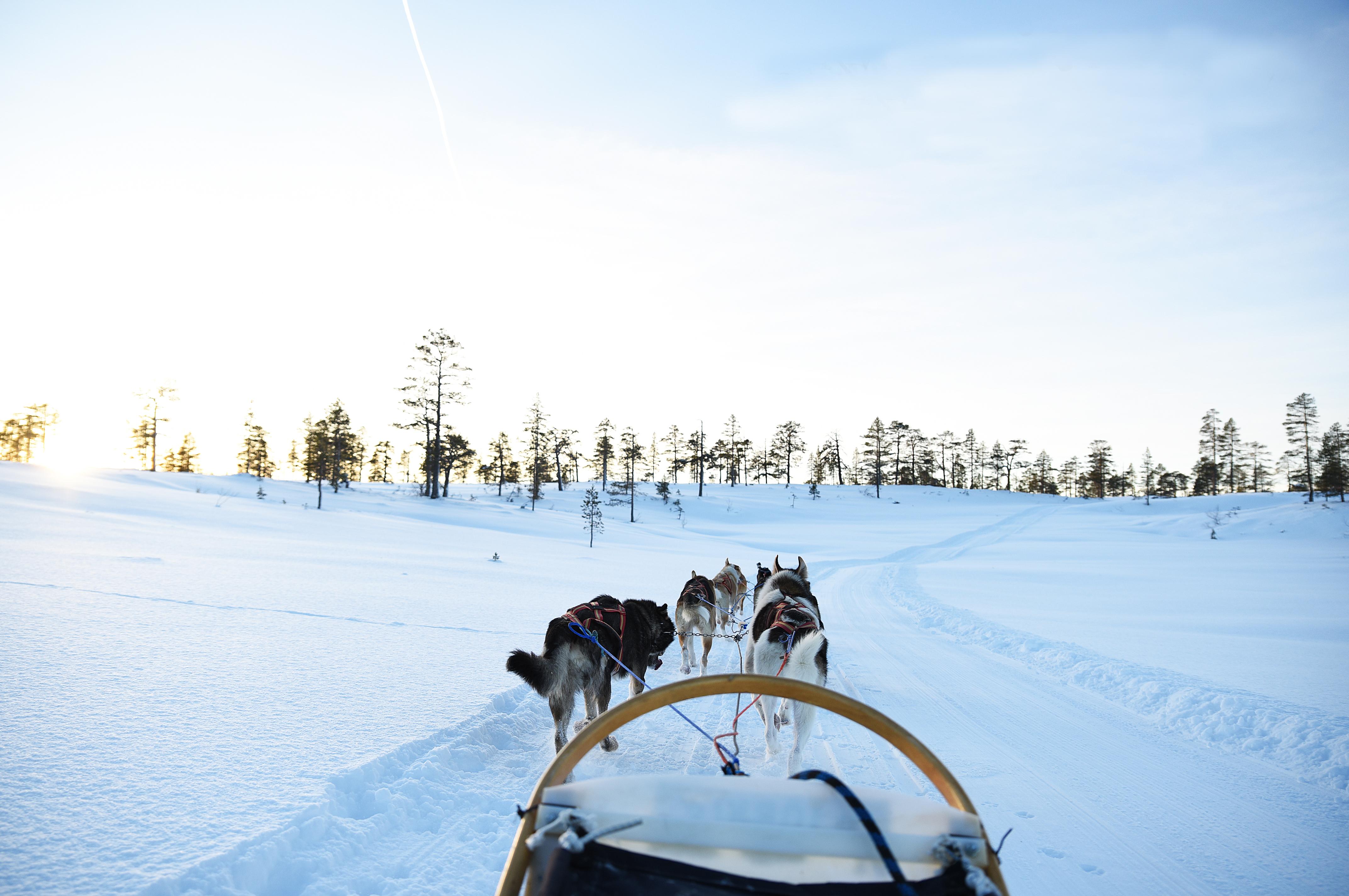 Hundekjøring med Norway Husky Adventure Foto: Norway Husky Adventure