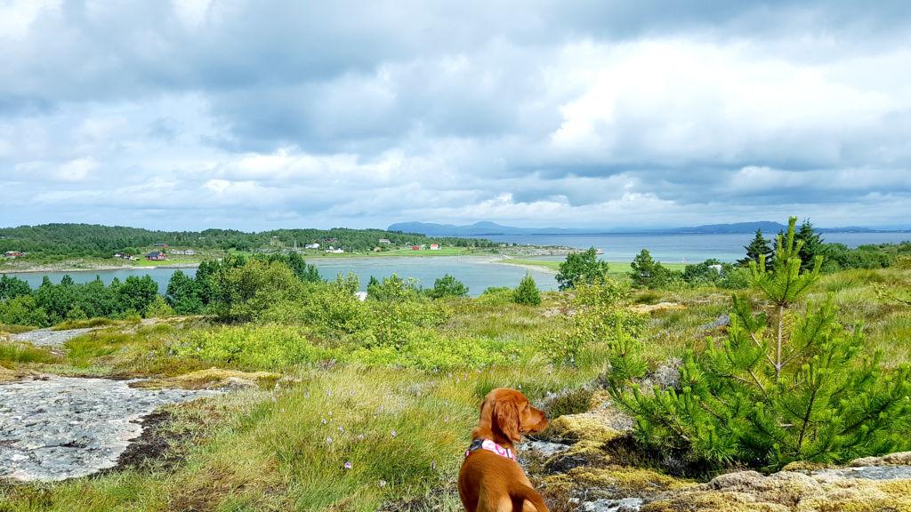Reis med hund i Trøndelag