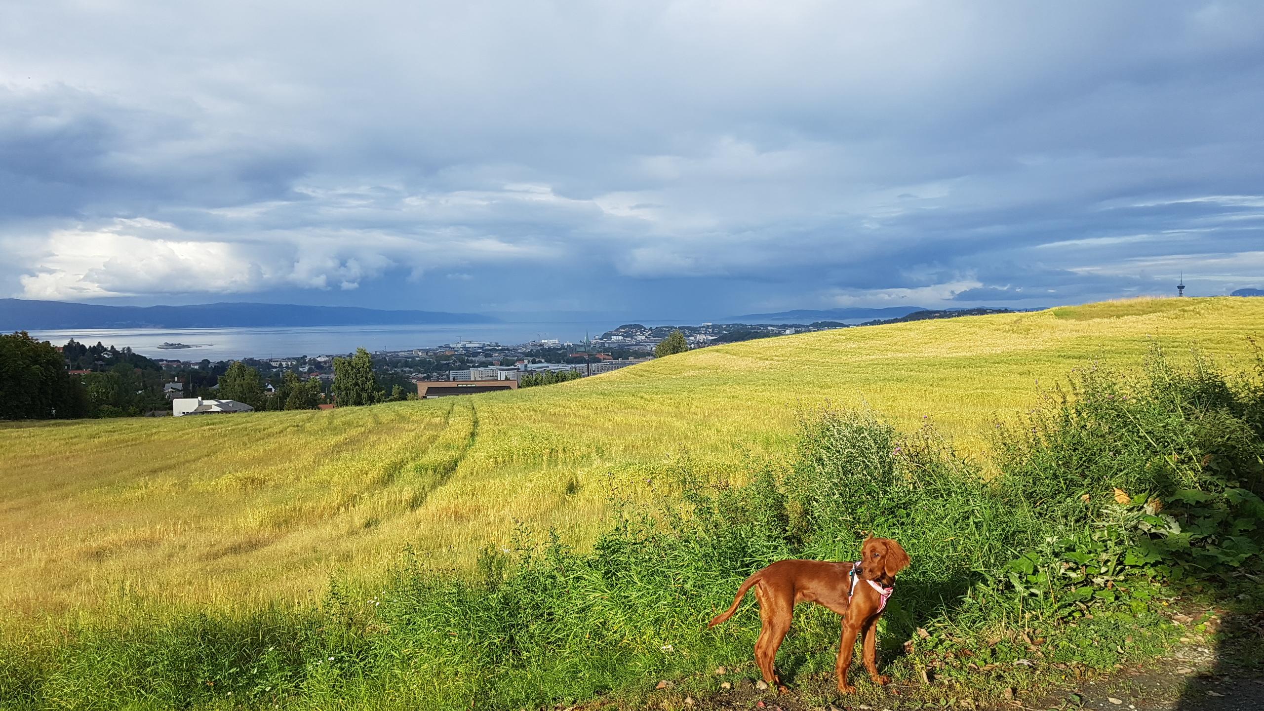 Reis med hund i Trøndelag Camilla Skaget Hansen/Trøndelag Reiseliv